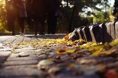 Scena di autunno, pavimentazione con le foglie gialle, parte di sotto del pietra-blocco fotografia stock