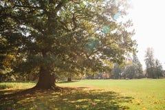 Scena di autunno Una quercia enorme nella priorità alta su una radura della foresta un giorno soleggiato Fotografia Stock