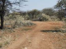 Scena di Bush dell'Africano Immagini Stock