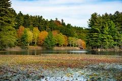 Scena di caduta con Autumn Trees Reflection in lago immagini stock