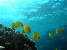 Scena di corallo fotografia stock libera da diritti
