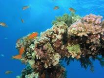 Scena di corallo immagini stock libere da diritti