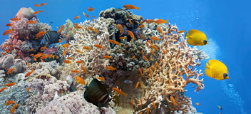 Scena di corallo - panorama Immagini Stock