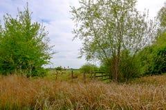 Scena di estate del raccolto arabile del grano visto nella campagna inglese Fotografia Stock