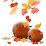 Scena di feste di autunno delle zucche e dei fogli maturi fotografia stock libera da diritti