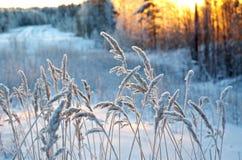 Scena di inverno Immagini Stock Libere da Diritti