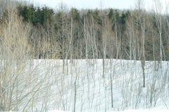 Scena di inverno Immagine Stock Libera da Diritti