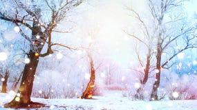 Scena di inverno Alberi innevati e fiume congelato Fotografia Stock