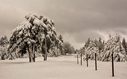 Scena di inverno, Bulgaria Fotografie Stock