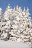 Scena di inverno con ghiaccio e neve Immagine Stock Libera da Diritti