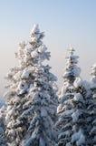 Scena di inverno con ghiaccio e neve Immagini Stock