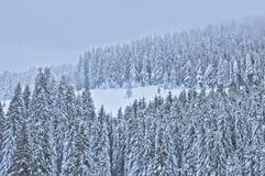 Scena di inverno con gli alberi nella foresta Immagini Stock Libere da Diritti