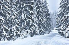Scena di inverno con gli alberi nella foresta Fotografie Stock