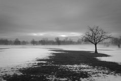 Scena di inverno con l'albero isolato Fotografia Stock Libera da Diritti