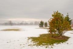 Scena di inverno con l'arbusto isolato con neve di fusione su terra Fotografia Stock