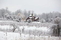 Scena di inverno in frutteto Fotografia Stock
