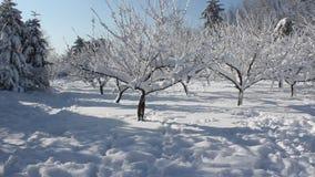 Scena di inverno in parco archivi video