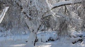 Scena di inverno in parco video d archivio