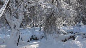 Scena di inverno in parco stock footage
