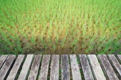 Scena di legno del pavimento di bello giacimento del riso sotto Vacanza di festa Fotografia Stock Libera da Diritti