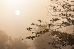 Scena di mattina dell'albero tropicale profilato con nebbia Immagine Stock