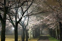 Scena di mattina della galleria dei fiori di ciliegia in un parco a Tokyo dopo la pioggia fotografia stock libera da diritti