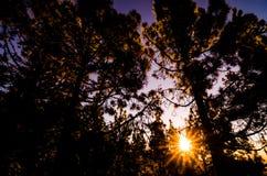 Scena di mattina nella foresta Immagini Stock