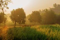 Scena di mattina, terra di agricoltura - India rurale Fotografie Stock