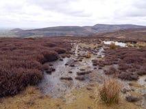Scena di Moorland dell'erica e dell'acqua fotografie stock libere da diritti