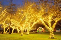 Scena di notte del giardino Fotografie Stock Libere da Diritti