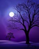 Scena di notte della luna piena Fotografia Stock