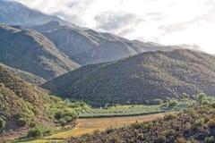 Scena di primo mattino nella valle di Matjiesvlei nello Swartberg Fotografia Stock Libera da Diritti