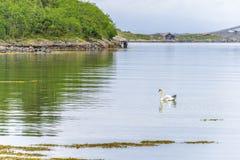 Scena di Serene Scandinavian Fjord Immagine Stock Libera da Diritti