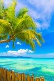 Scena di sogno Bella palma sopra la spiaggia bianca della sabbia Estate n fotografie stock libere da diritti