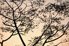 Scena di tramonto Immagini Stock Libere da Diritti