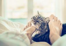 Scena domestica con il gatto a letto I piedi delle donne stanno graffiando il collo del gatto Fotografia Stock Libera da Diritti