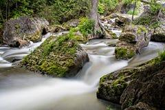 Scena esotica sul fiume di Sydenham Fotografia Stock