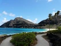 Scena hawaiana con la palma immagine stock