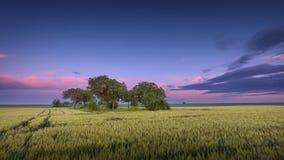 Scena idilliaca di agricoltura contro il bello cielo al crepuscolo Fotografia Stock Libera da Diritti