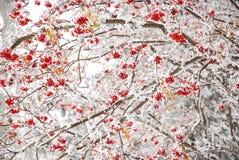 Scena iniziale di inverno Immagini Stock