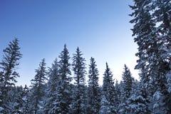 Scena innevata di inverno immagine stock libera da diritti
