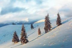 Scena invernale drammatica con gli alberi nevosi Immagine Stock