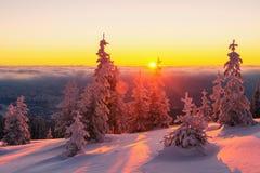 Scena invernale drammatica con gli alberi nevosi Fotografia Stock