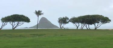 Scena minimalista dell'albero e dell'isola Fotografie Stock Libere da Diritti