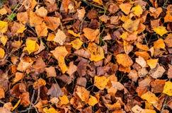 Scena naturale di autunno con le foglie cadute della terra fotografie stock libere da diritti