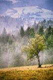Scena nebbiosa della montagna di autunno Pioggia e foschia di caduta Immagine Stock