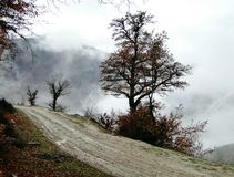 Scena nebbiosa di autunno Immagine Stock Libera da Diritti