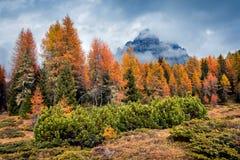 Scena nebbiosa di mattina in parco nazionale Tre Cime di Lavaredo Fotografie Stock Libere da Diritti