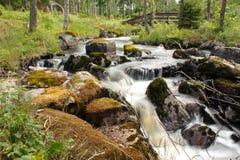 Scena od naturalnego parka Zdjęcie Royalty Free