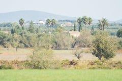 Scena pacifica del paesaggio su Mallorca, Spagna Fotografia Stock Libera da Diritti
